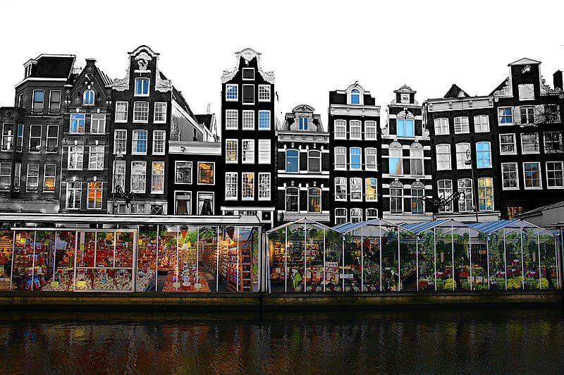 Tulipes du marché aux fleurs à Amsterdam