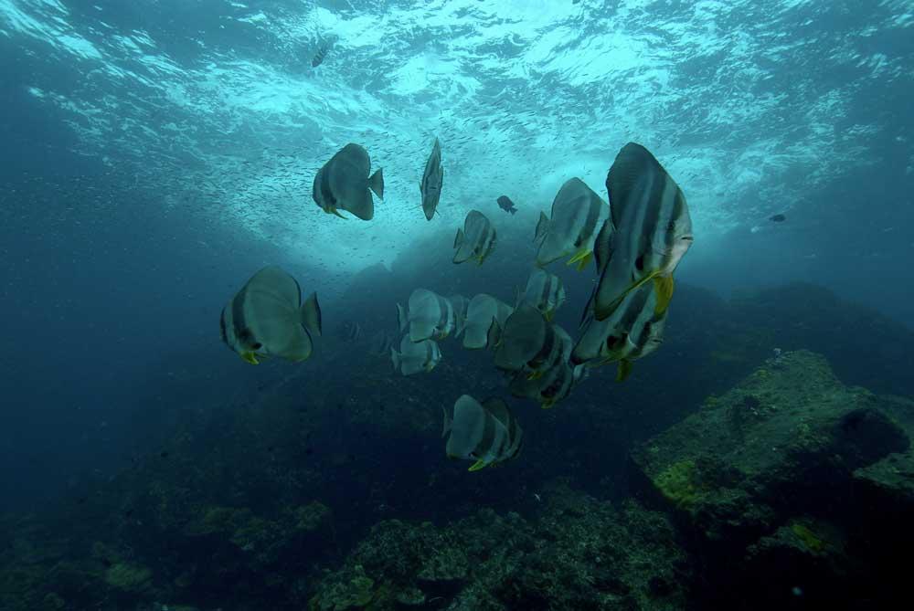 Plongée à Koh Lanta